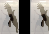 A figure is captured dancing in front of lockers with an image of an eagle layered over them